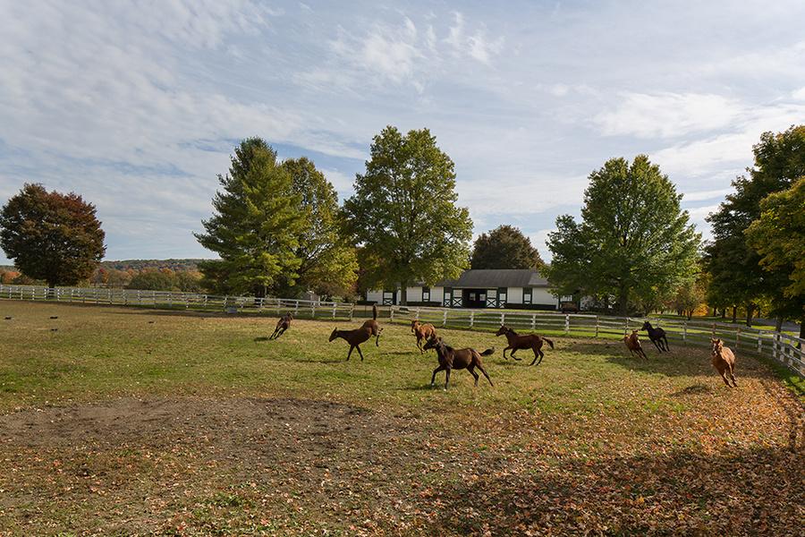 糖枫农场拥有赛马育种和培训设施。图片来源: